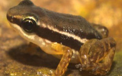 Proyecto  de Ahuyamiento, Rescate y Reubicación de Fauna